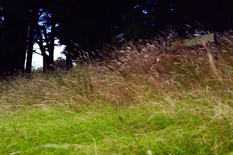 Moor-rul grasses